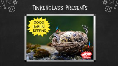 Cover art for Tinkerclass (Week 3 Day 3): Create & Test