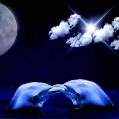 Cover art for Sleep Meditation for Kids: DOLPHIN DREAMS - Bedtime Meditation for Children