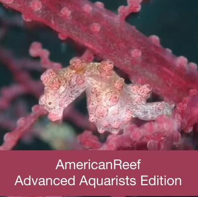 Americanreef - Keeping Saltwater and Coral Reef Aquariums by Learning from Advanced Aquarists